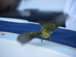 2007 Tri-State Regatta - Finches Crew - Deck Fluff